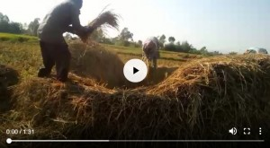 rice-farm-video-1