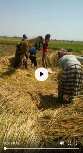 rice-farm-video-2